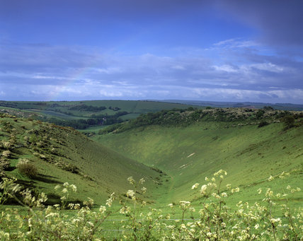 A view of the Devil's Dyke in West Sussex taken in the summer with wild foliage moving in the breeze in the foreground