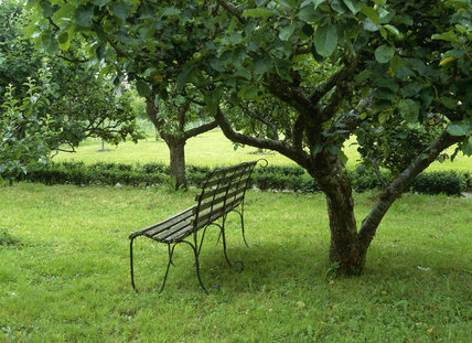 The orchard in the East Walled Garden at Llanerchaeron with a garden seat under an apple tree