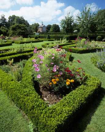 Summer flower beds in the garden at Westbury Court, including Cosmos