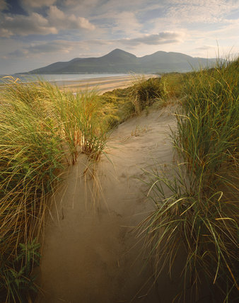 Ireland's first nature reserve at Murlough Beach, County Down