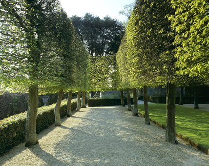 View along the Stilt Garden at Hidcote Manor Garden