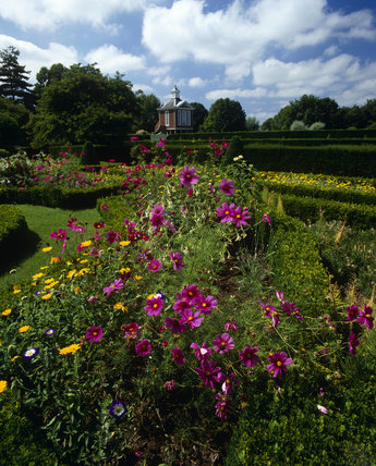 Looking across summer flower beds including Cosmos