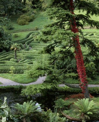 Looking down onto the Cherry Laurel maze at Glendurgan