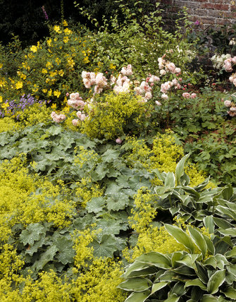 The herbaceous border at Acorn Bank, including hypericum, roses, deutzia and hostas