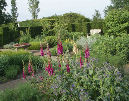 Deep pink foxgloves and purple borage in the Herb Garden at Sissinghurst