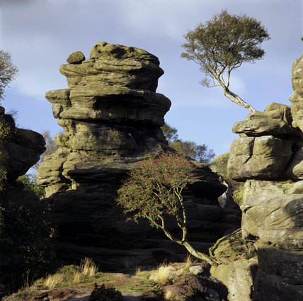 A view of Turtle Rock from Castle Rocks, with birch trees, at Brimham Rocks, North Yorkshire