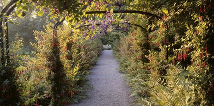 A view along the Fuchsia Arch looking towards the white bench at the end of the archway