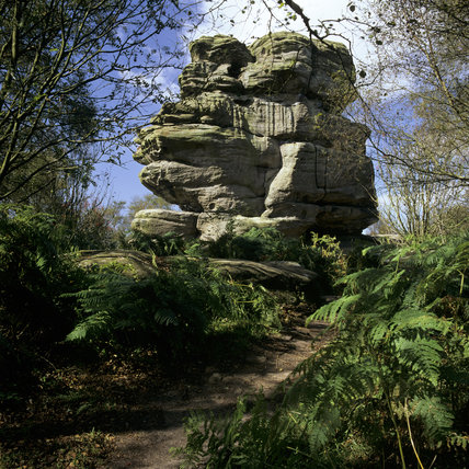 A view looking towards a large solid formation of Brimham Rocks surrounded by trees and plants