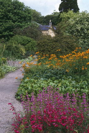A view of the Walled Garden at Rowallane with the flower beds growing penstemons and alstromerias