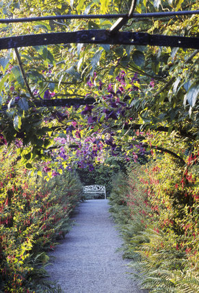 A view looking along the Fuchsia Arch towards the white bench at the end of the path