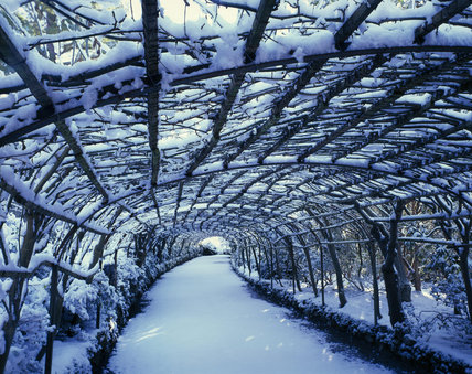 The Laburnum Arch in Bodnant Garden, under a blanket of snow, rather than the more spectacular golden racemes of spring