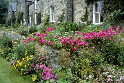 A variety of plants, including roses, asters and nasturtiums in abundance around Cambo Village