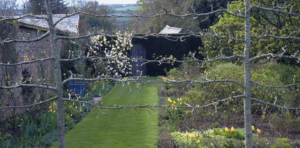 View of Antony House summer garden, through Limes, with Tulips and Magnolia