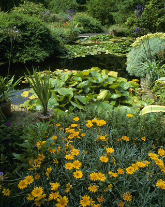 The Pine Garden Pool at Hidcote Manor, with water lilies, and surrounded by gazania and agapanthus