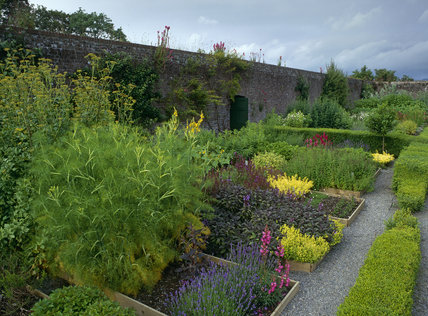 The herb garden in the East Walled Garden at Llanerchaeron, looking east with fennel in the foreground