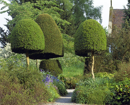 Yew and Box trees in the garden at Benthall Hall in front of the house