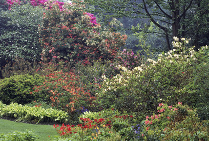 A view of the Shrub Garden including Magnolia Wilsonii, Pteris and Azaleas