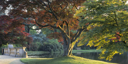 A view of 'Acers' at Top Bridge on the Top Lake at Sheffield Park Garden on a summer's evening