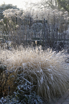 Frost accentuating the winter grasses and plants in January at Sissinghurst Castle Garden, near Cranbrook, Kent