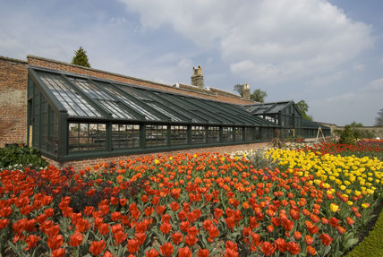 A mass of scarlet, orange and yellow tulips in the Walled Garden in April at Wimpole Hall, Cambridgeshire. The glasshouse was recreated in 2000 from an original design by Sir John Soane.