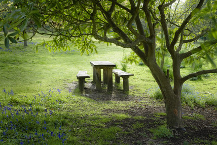 Picnic bench and table in the parkland at Leith Hill Place, Dorking, Surrey
