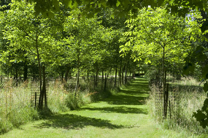 Mown paths bordered with trees make restful walks through Buscot Park, Oxfordshire