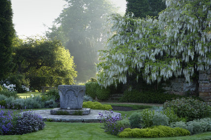 The Venetian wellhead and a beautiful white wisteria in the garden at Scotney Castle, Lamberhurst, Kent