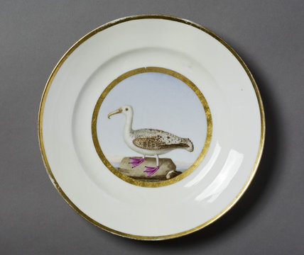 Plate decorated with a specimen bird by Guerhard, Paris, at Hinton Ampner, Hampshire