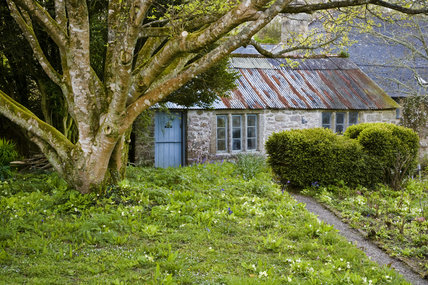 The garden with bluebells and primroses in April, and an old outbuilding on the Godolphin Estate, Helston, Cornwall