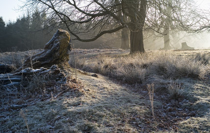 Walks through the parkland at Knole, Kent, in December