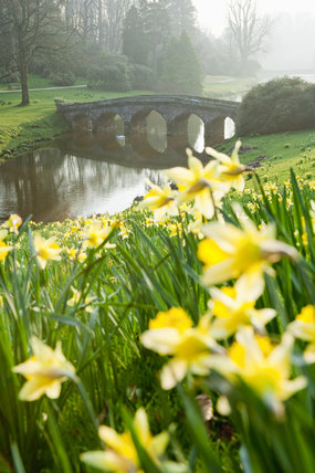 The Palladian Bridge on the lake at Stourhead, Wiltshire, in March with daffodils flowering on the bank