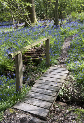 Footpath through the bluebell woods in April on the estate at Standen, West Sussex