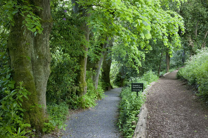 Lime trees lining a path in the garden at Greenway, Devon, which was the holiday home of the crime writer Agatha Christie between 1938 and 1976