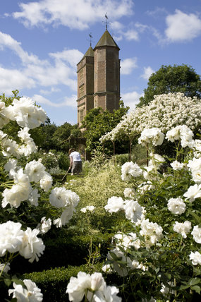 Billowing roses in June in the White Garden with the Elizabethan Tower in the background and a gardener at work at Sissinghurst Castle