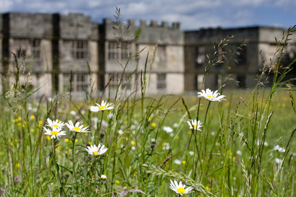 Wildlfower meadow in the foreground with the Hall beyond at Gibside, Newcastle upon Tyne
