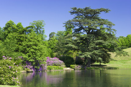 The amphitheatre (just visible to the right), lake and rhododendrons at Claremont Landscape Garden in Surrey