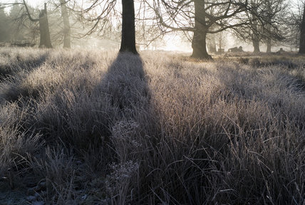 A low sun creates atmospheric lighting amongst the trees in the park at Knole, Kent, in December