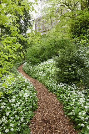Path through the wild garlic in the garden at Newark Park, Gloucestershire.  Originally an Elizabethan hunting lodge built by Sir Nicholas Poyntz in c.1550, alterations were made in the 1790s by James Wyatt.