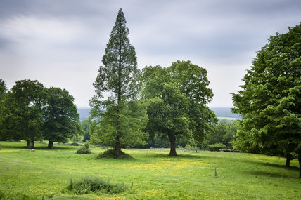 Trees in the grounds of Leith Hill Place, Dorking, Surrey