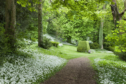 The woodland garden at Newark Park, Gloucestershire.