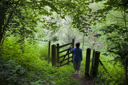 Visitor stands at the five barred gate in the woodland garden at Newark Park, Gloucestershire.