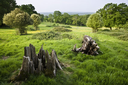 A view over tree stumps in the grounds of Leith Hill Place, Dorking, Surrey