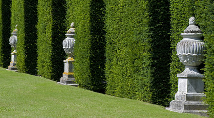 Display of ornamental urns in niches in the hedges at Buscot Park, Oxfordshire