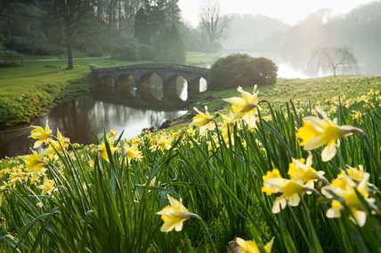 Narcissi in the foreground, and the Palladian Bridge over the lake at Stourhead, Wiltshire, in March