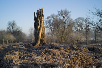 A dead tree trunk in the parkland at Knole, Kent, in December, stands as a reminder of the great strom that struck the south east of England in 1987