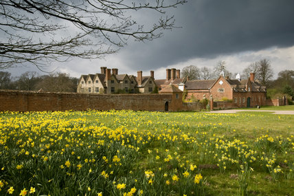 A view from the east, over fields of daffodils, of Packwood House, Solihull, Warwickshire, a restored Tudor house