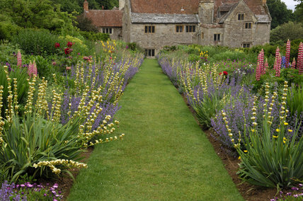 Blue and yellow planting, with pink lupins and Sisyrinchium striatum in the borders at Mottistone Manor Garden on the Isle of Wight