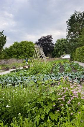 The vegetable garden in June at Sizergh Castle, near Kendal, Cumbria