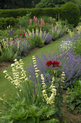Colourful planting with Sisyrinchium striatum in the borders in June at Mottistone Manor Garden on the Isle of Wight