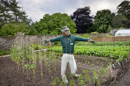 A scarecrow in the vegetable garden at Sizergh Castle, near Kendal, Cumbria